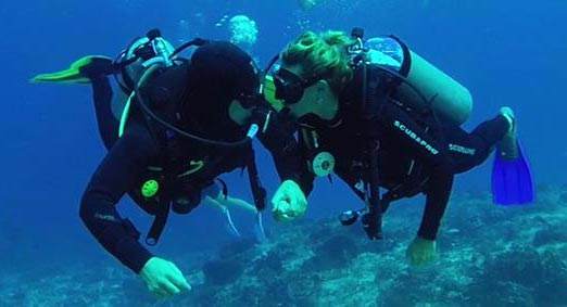 Inmersiones guiadas buceo Liquid Planet Web